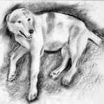 Dog3_2008