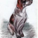 Dog_2010